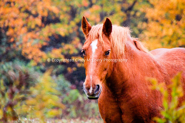Fall Mountain Horse