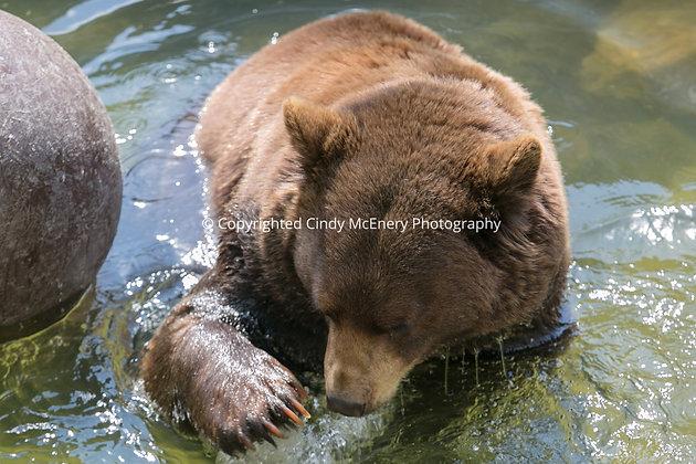 Grandfather Bear #6