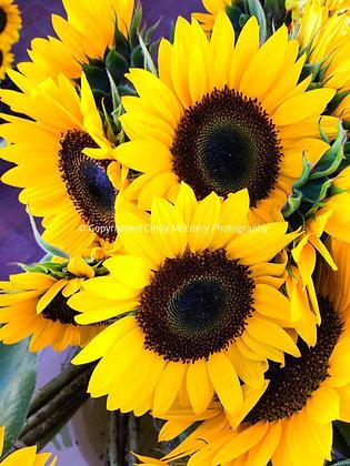 Sante Fe Sunflowers #1