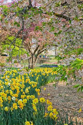 Keukenhof Gardens #2