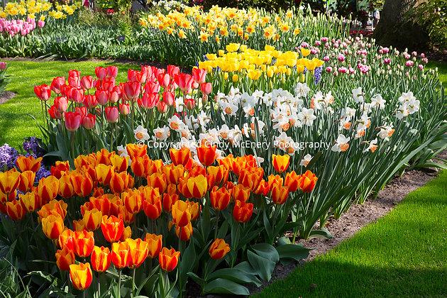 Keukenhof Gardens #7