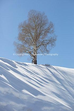 Tree #2 | Colorado