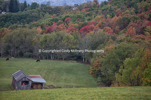 Fall #14 | Avery County