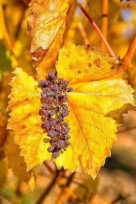 Fall #8 | Oregon
