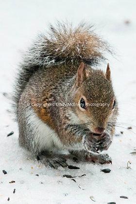 Winter Squirrel #2