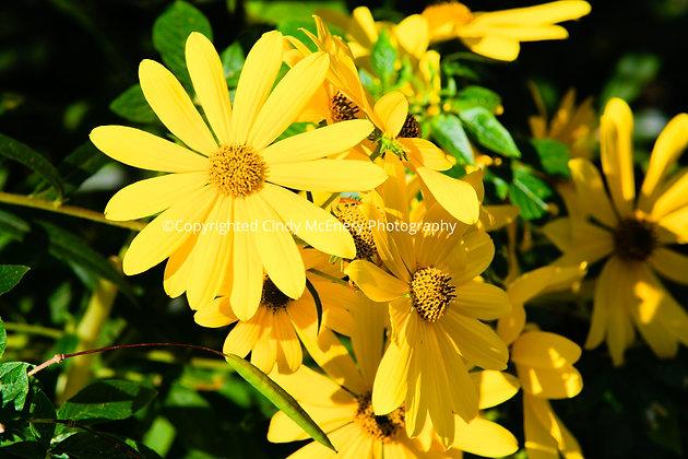 Flowers #1