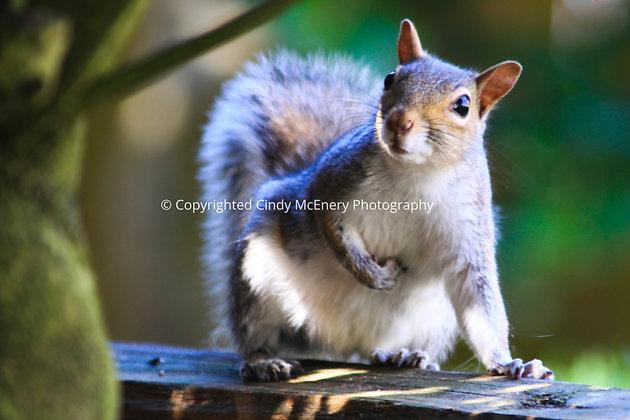 Fall Squirrel #2