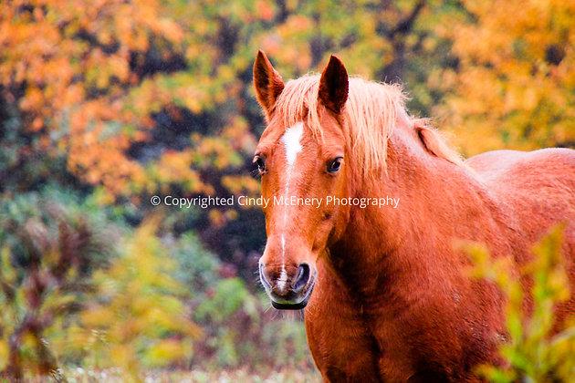 Fall #3 | Avery County