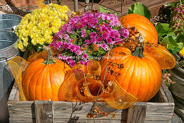 Fall #1 | Linville