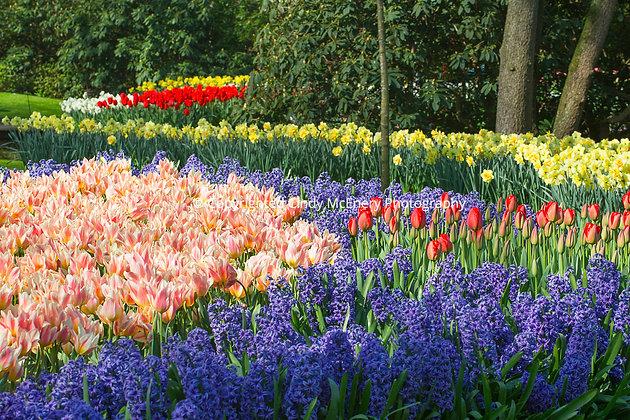 Keukenhof Gardens #1