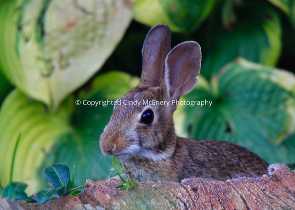 Bunnies #2