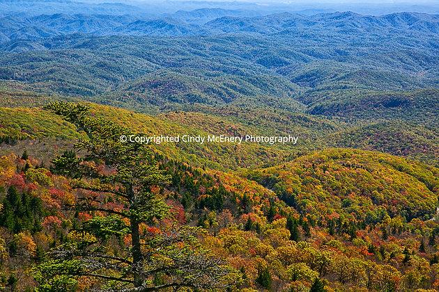 Fall #1   Grandfather Mountain