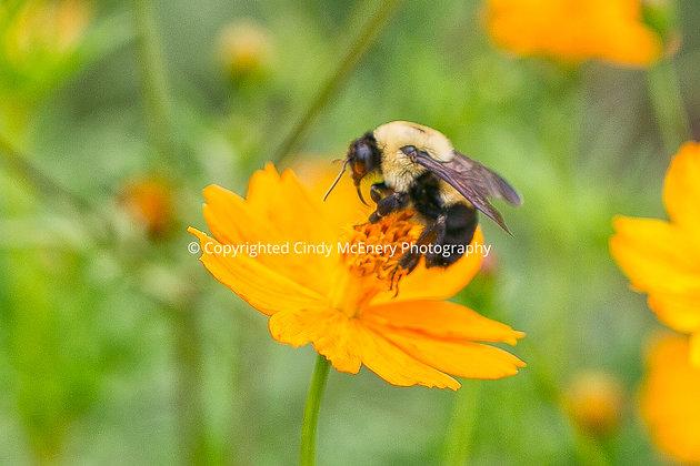 Raleigh Sunflowers #14