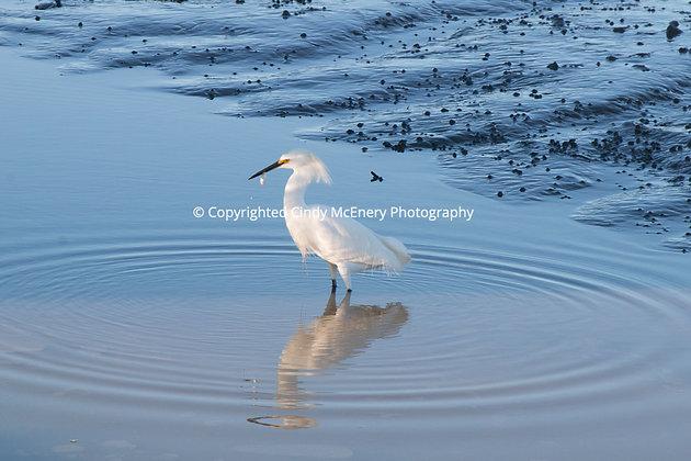 Jekyll Island Heron #5