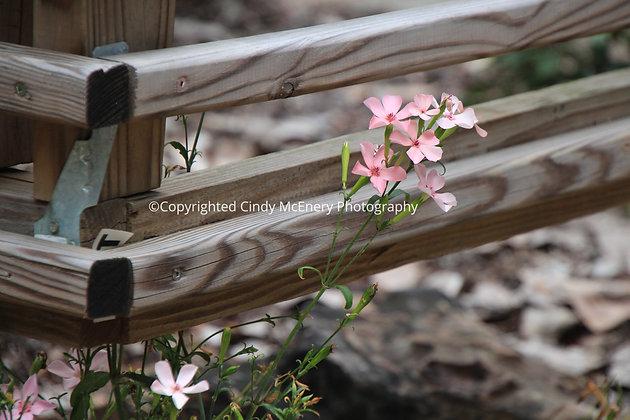 Parkway Flowers #3