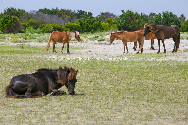 Shackleford Island #6