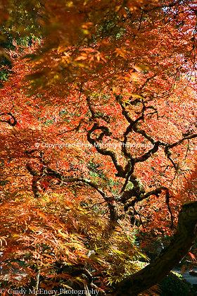 Tree #5 | Japanese Gardens Oregon