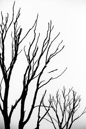 Tree | Avery County #7