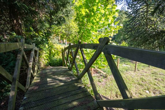 Bridge to the wild garden