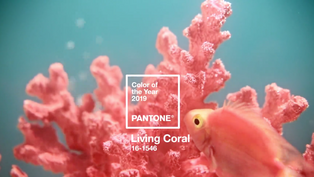 Pantone Living Coral El Color del Año 2019