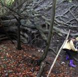 Woodland Investigators