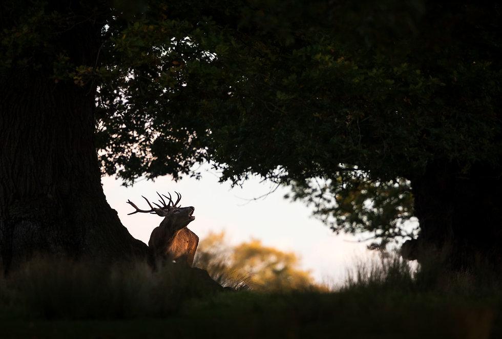 Red_deer-9689.jpg