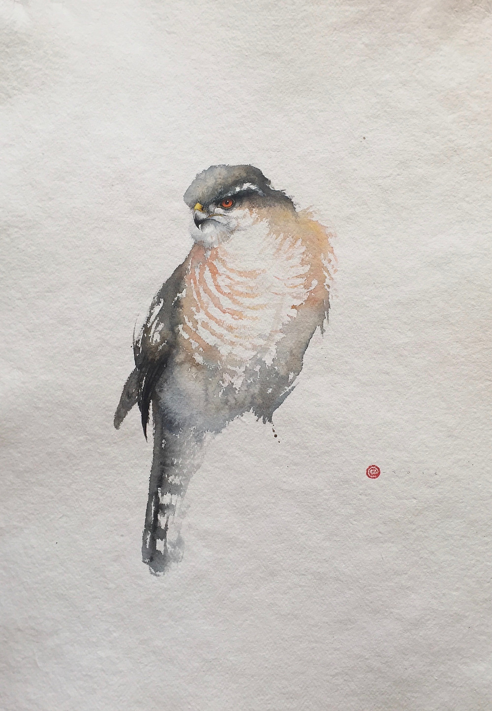 Sparrowhawk by Karl Martens