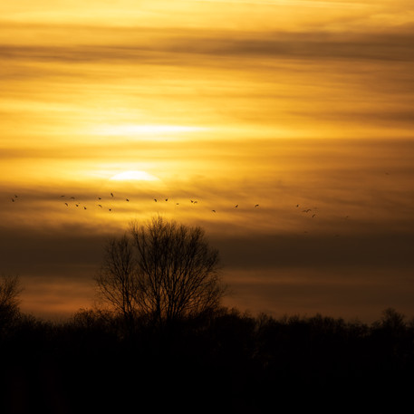 A Fenland Sky