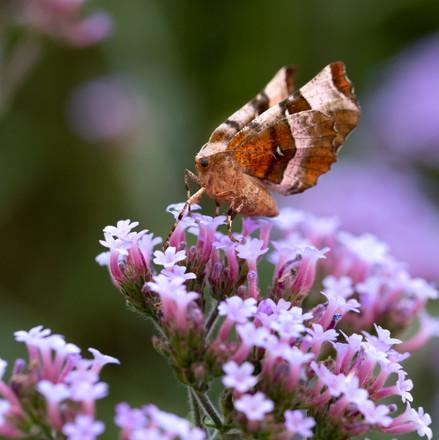 moth-7048.jpg
