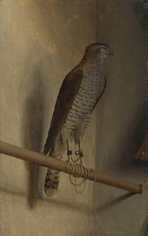 A Sparrowhawk by Jacopo de' Barbari