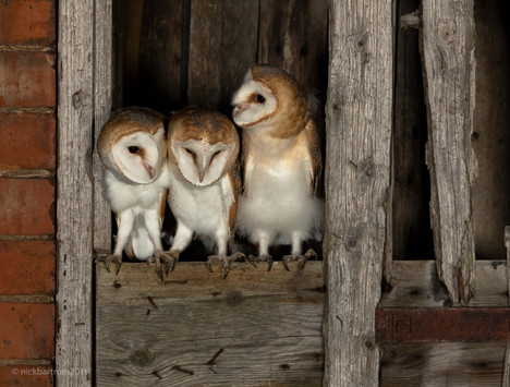 The Owling Hour