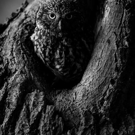 Dark Night, New Morning (Fenland Owls)