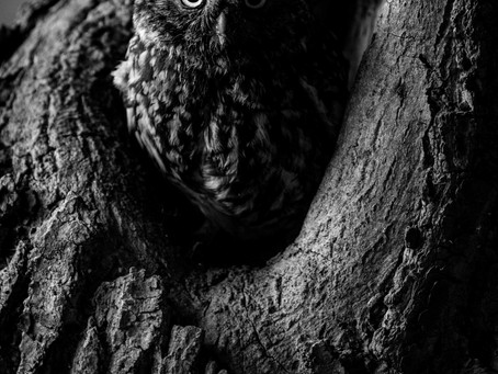 Dark Night, New Morning (Fenland Owls)