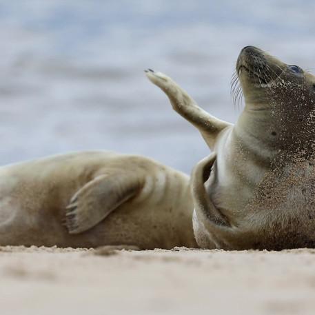 Seal life