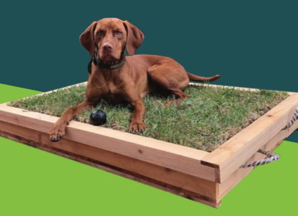 "Kit de Inicio Pet Grass - Tamaño ""L"""