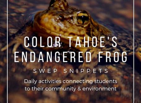 Color Tahoe's Endangered Frog