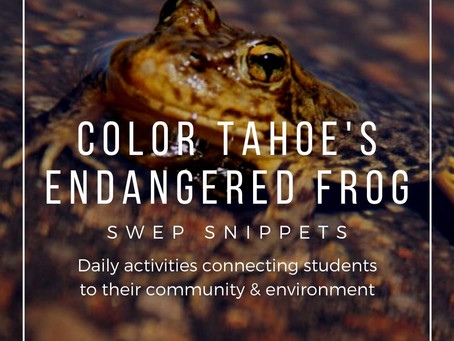Color Tahoe's Endangered Frog