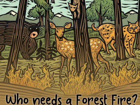 FOREST⇌FIRE - Learning Resources