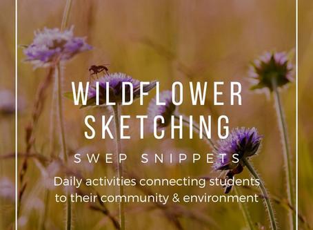 Wildflower Sketching