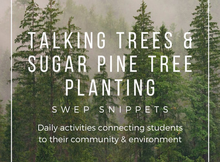 Talking Trees & Plant Your Own Sugar Pine