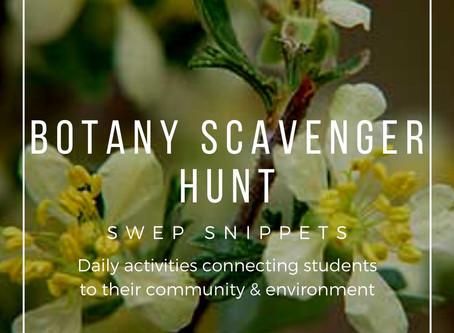 Botany Scavenger Hunt