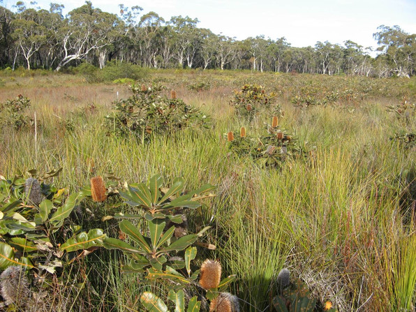 Upland Swamps, Dendrobium lease area