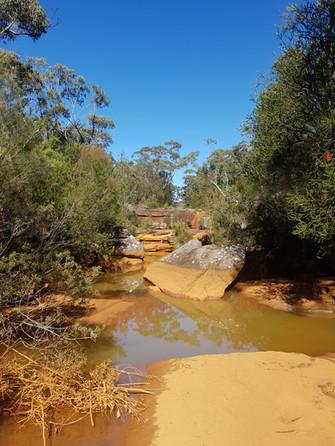 Contaminated stream near Woronora Dam