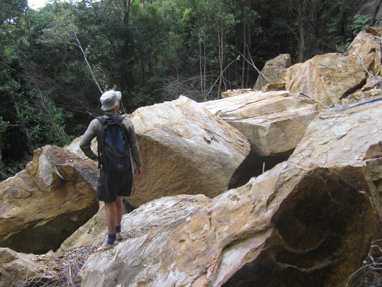 Dendrobium Area 1