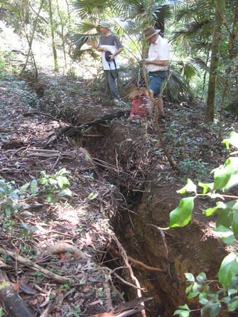 Dendrobium Area 2