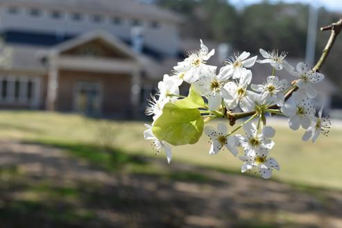Sugar Creek Club House Spring