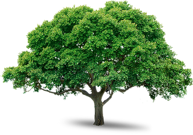 tree_PNG216.png