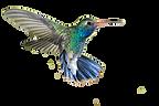 hummingbird_PNG56.png