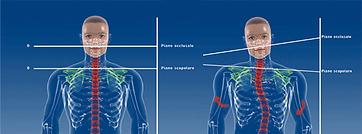 modelli-corpo-posturologia.png