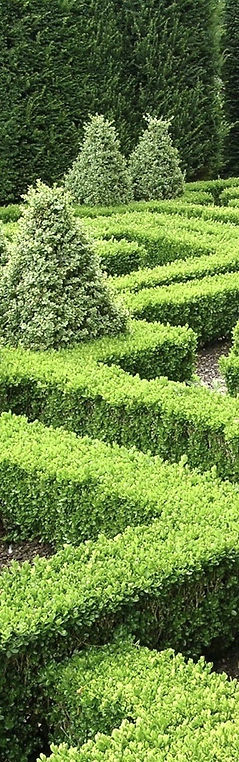 Finding your way through the maze